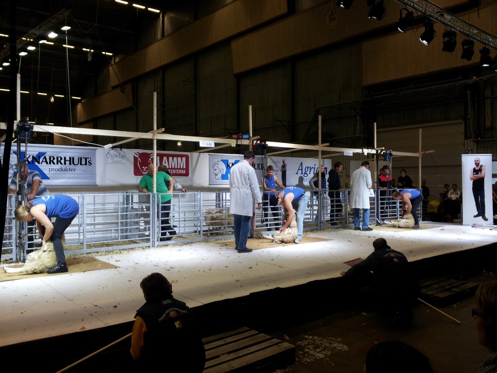 Sheep shearing contest in the same hall as Liros booth.
